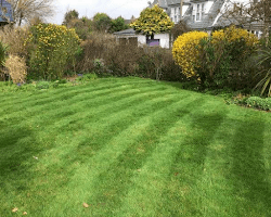 Trimmed lawn